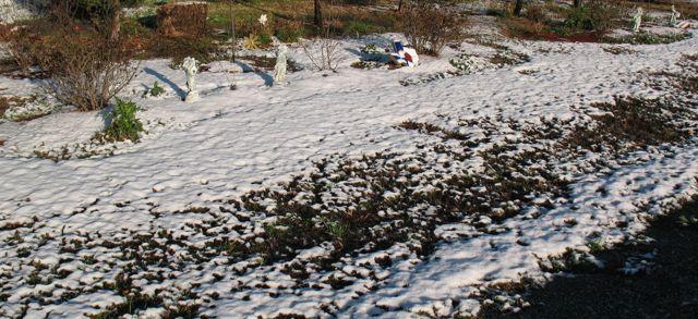 Snow at Casa de Snark